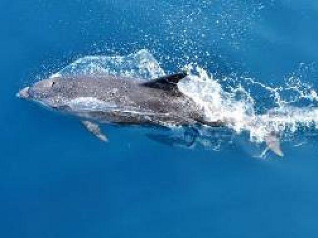 Panorama avec les dauphins